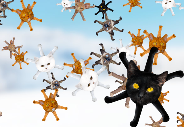 catflakes (just because..)